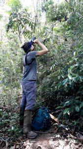Amanda Hardie uses binoculars to look up into the canopy while observing howler monkeys.