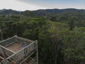 Dr. Karen Strier in a canopy tower at her field site, Reserva Particular Patrimonio Natural – Feliciano Miguel Abdala